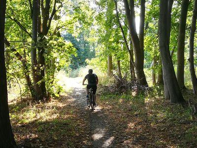 Fahrradtour durch Friedeburger Wälder