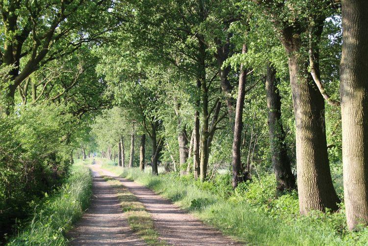Schöne Wälder und Wege in Friedeburg
