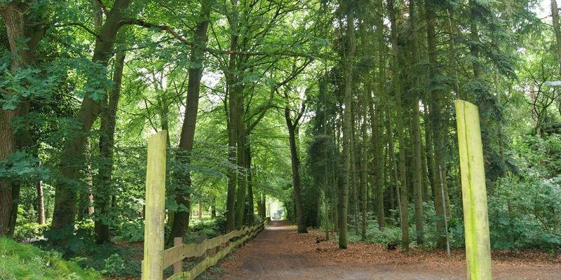 Strooter Wald